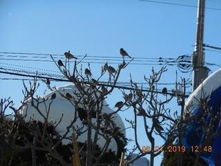 SparrowFruits 3 (8Jan-2).jpg
