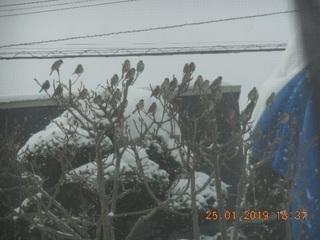 SparrowFruits 4 (25Jan).jpg
